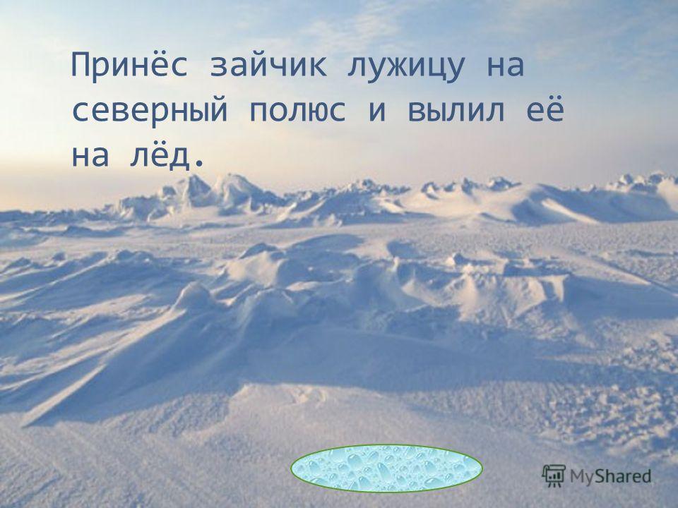 Принёс зайчик лужицу на северный полюс и вылил её на лёд.