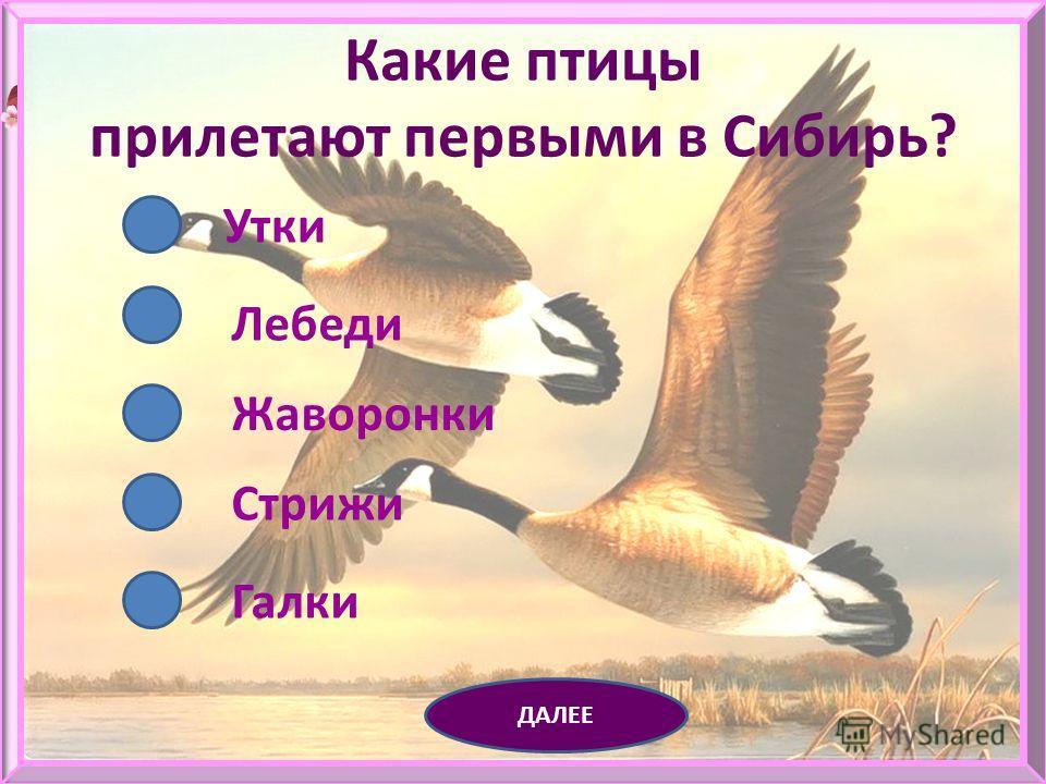 Какие из птиц перелетные? Ласточка Лебедь Ворона Стриж Воробей ДАЛЕЕ