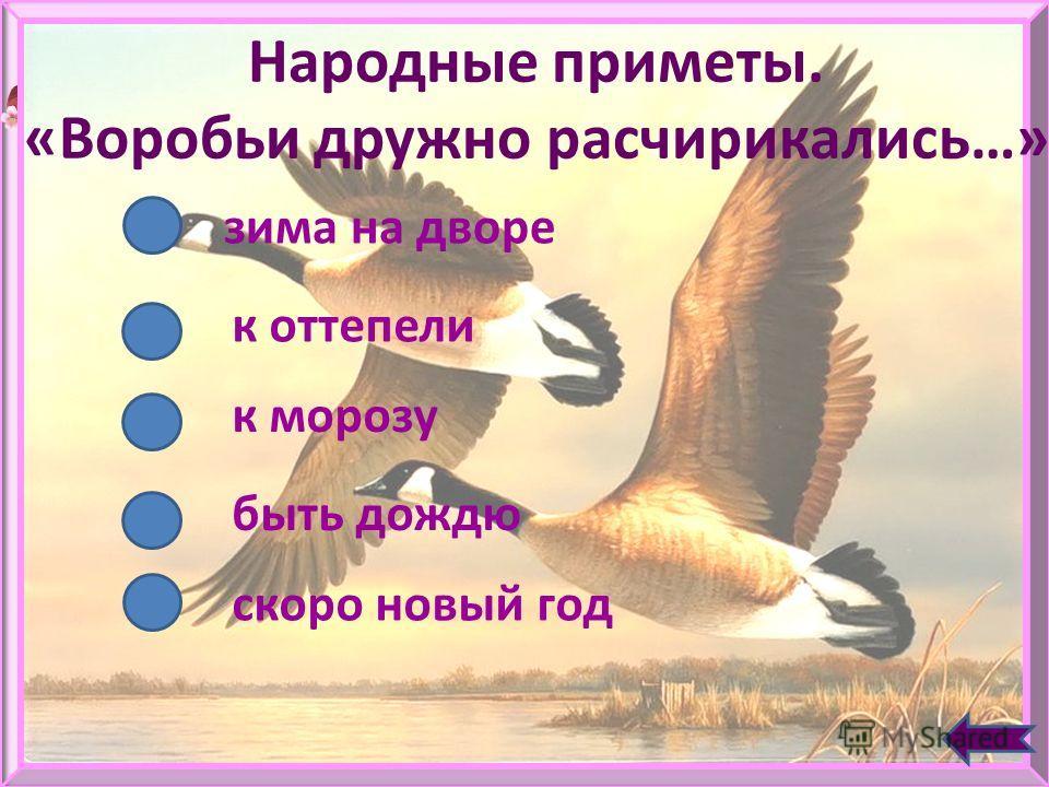 Какие птицы летают быстрее всех? Ласточки Сокол - сапсан Утки Стрижи Жаворонки ДАЛЕЕ
