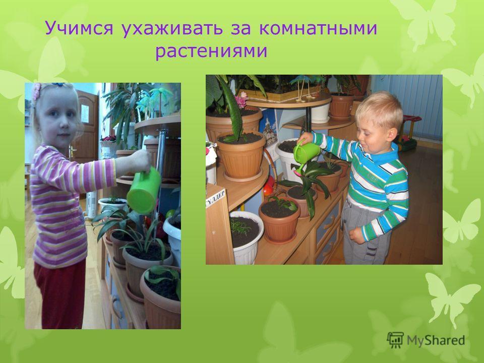 Учимся ухаживать за комнатными растениями