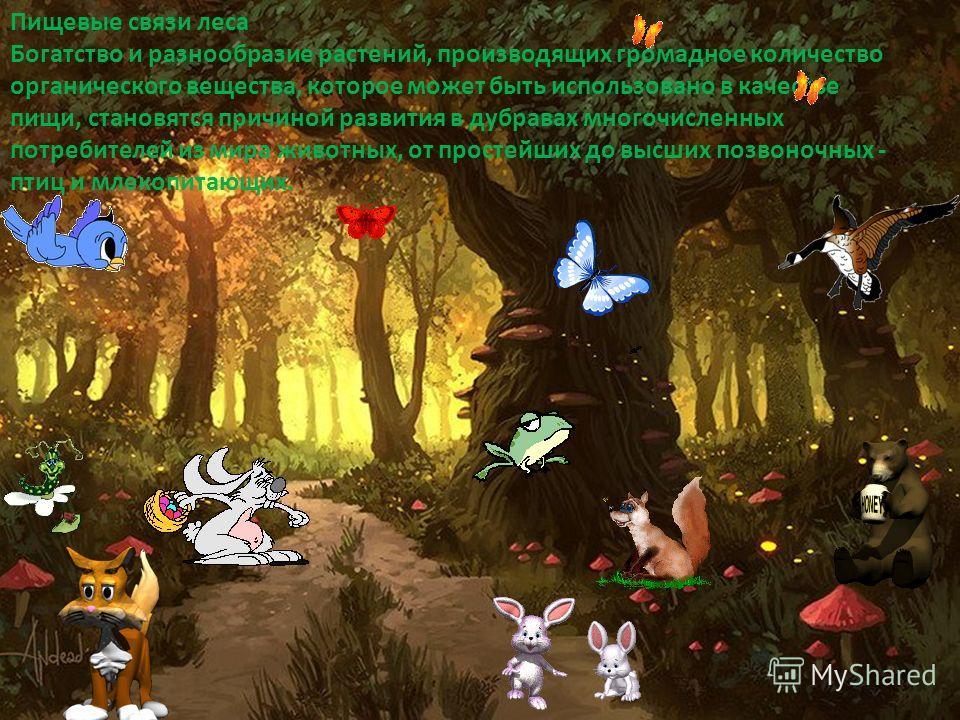 Пищевые связи леса Богатство и разнообразие растений, производящих громадное количество органического вещества, которое может быть использовано в качестве пищи, становятся причиной развития в дубравах многочисленных потребителей из мира животных, от
