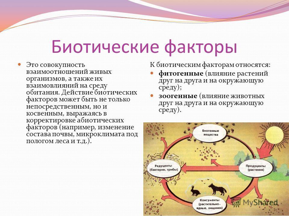 Биотические факторы Это совокупность взаимоотношений живых организмов, а также их взаимовлияний на среду обитания. Действие биотических факторов может быть не только непосредственным, но и косвенным, выражаясь в корректировке абиотических факторов (н