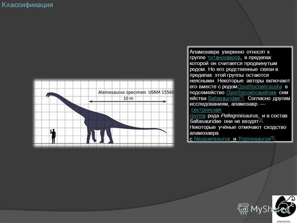 Классификация Аламозавра уверенно относят к группе титанозавров, в пределах которой он считается продвинутым родом. Но его родственные связи в пределах этой группы остаются неясными. Некоторые авторы включают его вместе с родомOpisthocoelicaudia в по