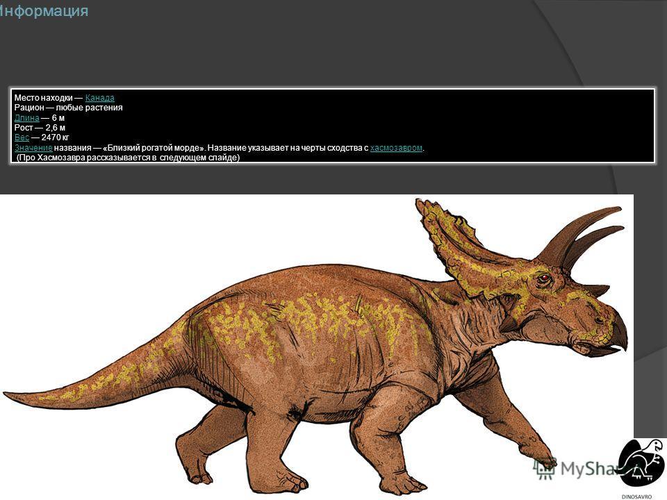 Информация Место находки КанадаКанада Рацион любые растения ДлинаДлина 6 м Рост 2,6 м ВесВес 2470 кг ЗначениеЗначение названия «Близкий рогатой морде». Название указывает на черты сходства с хасмозавром.хасмозавром (Про Хасмозавра рассказывается в сл
