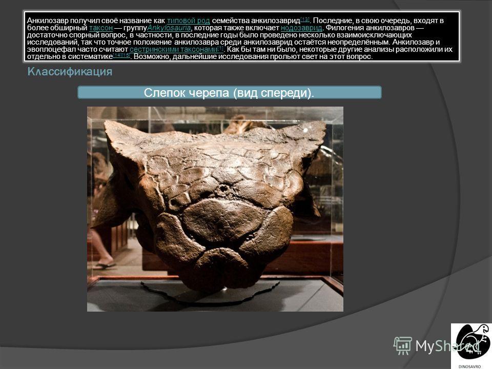 Классификация Анкилозавр получил своё название как типовой род семейства анкилозаврид [13]. Последние, в свою очередь, входят в более обширный таксон группуAnkylosauria, которая также включает нодозаврид. Филогения анкилозавров достаточно спорный воп