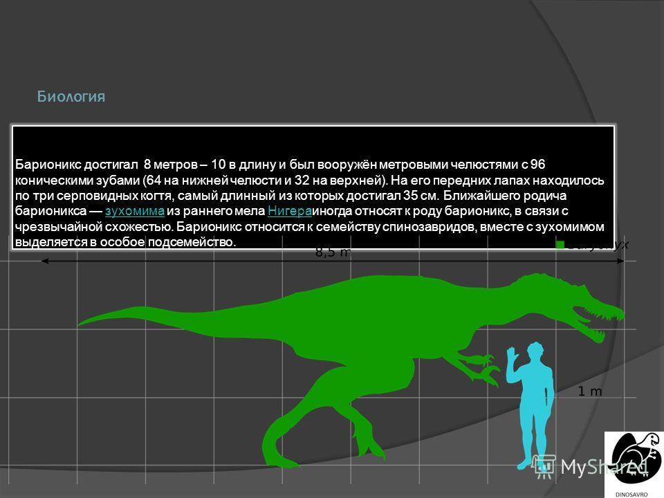 Биология Барионикс достигал 8 метров – 10 в длину и был вооружён метровыми челюстями с 96 коническими зубами (64 на нижней челюсти и 32 на верхней). На его передних лапах находилось по три серповидных когтя, самый длинный из которых достигал 35 см. Б