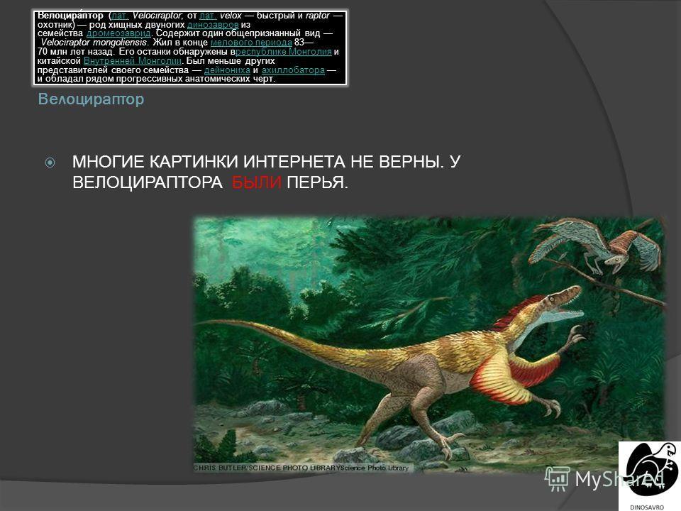 Велоцираптор Велоцира́птор (лат. Velociraptor; от лат. velox быстрый и raptor охотник) род хищных двуногих динозавров из семейства дромеозаврид. Содержит один общепризнанный вид Velociraptor mongoliensis. Жил в конце мелового периода 83 70 млн лет на