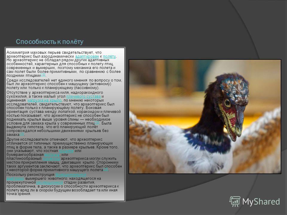 Способность к полёту Асимметрия маховых перьев свидетельствует, что археоптерикс был аэродинамически адаптирован к полёту. Но археоптерикс не обладал рядом других адаптивных особенностей, характерных для способных к полету птиц, современных и вымерши