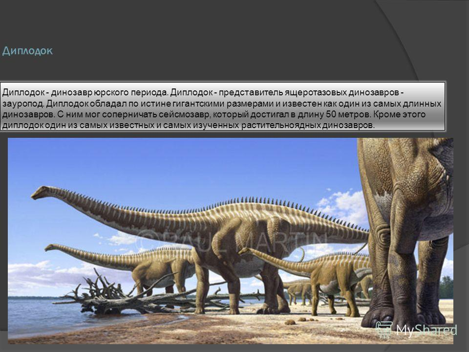 Диплодок Диплодок - динозавр юрского периода. Диплодок - представитель ящеротазовых динозавров - зауропод. Диплодок обладал по истине гигантскими размерами и известен как один из самых длинных динозавров. С ним мог соперничать сейсмозавр, который дос