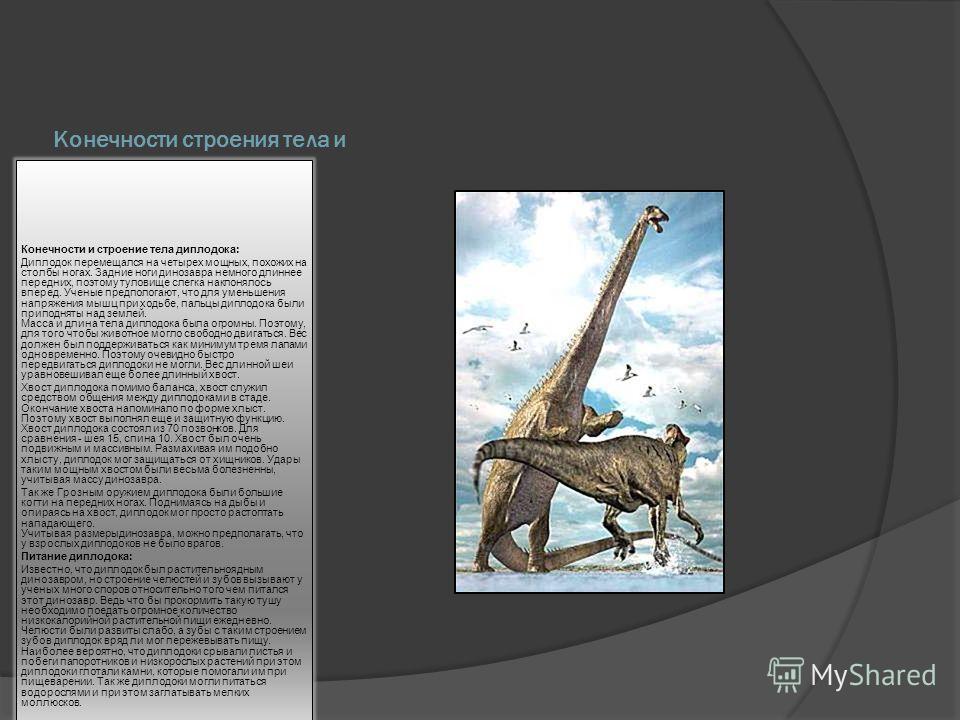 Конечности строения тела и питание Конечности и строение тела диплодока: Диплодок перемещался на четырех мощных, похожих на столбы ногах. Задние ноги динозавра немного длиннее передних, поэтому туловище слегка наклонялось вперед. Ученые предпологают,