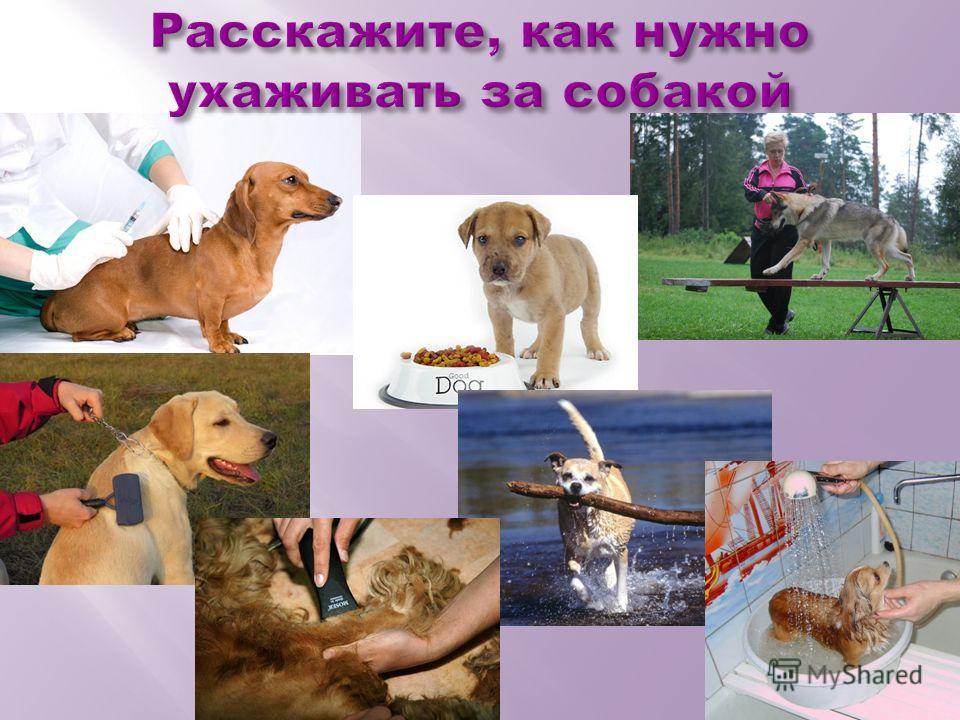 Расскажите, как нужно ухаживать за собакой