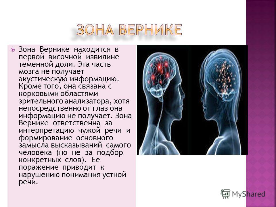 Зона Вернике находится в первой височной извилине теменной доли. Эта часть мозга не получает акустическую информацию. Кроме того, она связана с корковыми областями зрительного анализатора, хотя непосредственно от глаз она информацию не получает. Зона