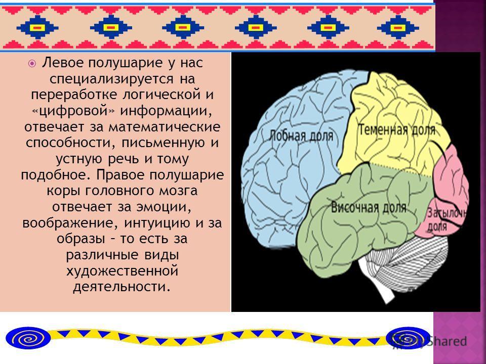 Левое полушарие у нас специализируется на переработке логической и «цифровой» информации, отвечает за математические способности, письменную и устную речь и тому подобное. Правое полушарие коры головного мозга отвечает за эмоции, воображение, интуици