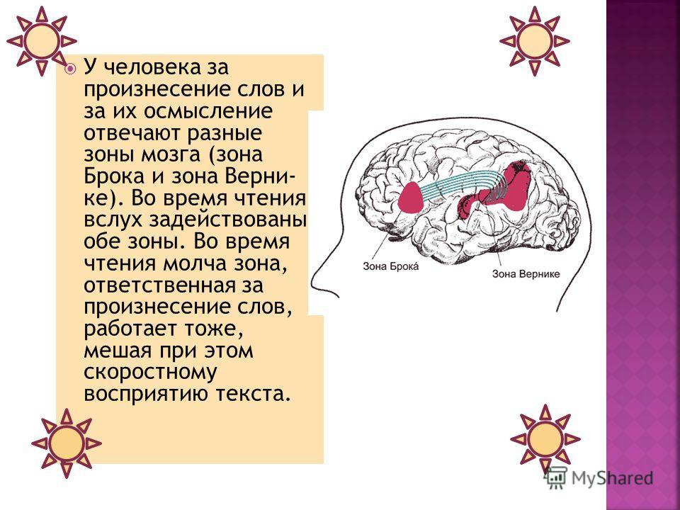 У человека за произнесение слов и за их осмысление отвечают разные зоны мозга (зона Брока и зона Верни- ке). Во время чтения вслух задействованы обе зоны. Во время чтения молча зона, ответственная за произнесение слов, работает тоже, мешая при этом с