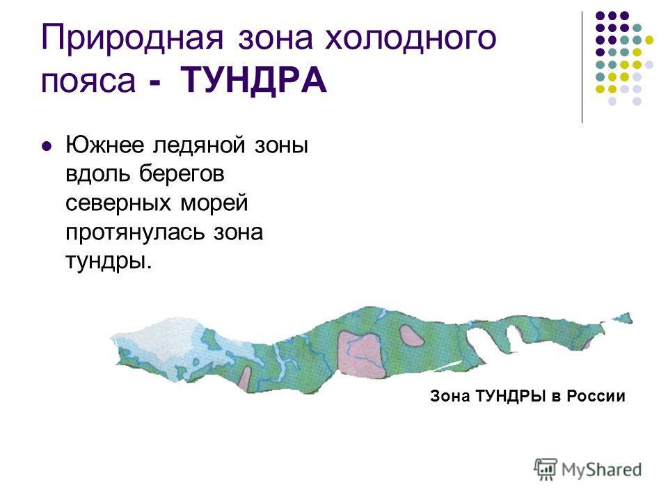 Природная зона холодного пояса - ТУНДРА Южнее ледяной зоны вдоль берегов северных морей протянулась зона тундры. Зона ТУНДРЫ в России