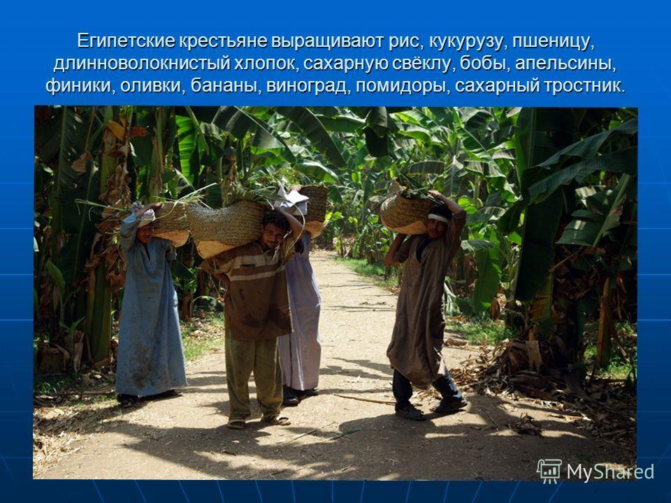Египетские крестьяне выращивают рис, кукурузу, пшеницу, длинноволокнистый хлопок, сахарную свёклу, бобы, апельсины, финики, оливки, бананы, виноград, помидоры, сахарный тростник.