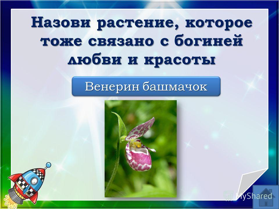 Венерин башмачок Назови растение, которое тоже связано с богиней любви и красоты