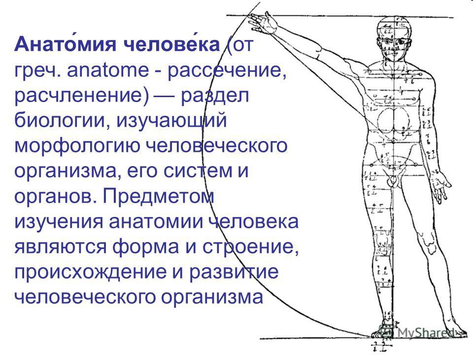 Анато́мия челове́ка (от греч. anatome - рассечение, расчленение) раздел биологии, изучающий морфологию человеческого организма, его систем и органов. Предметом изучения анатомии человека являются форма и строение, происхождение и развитие человеческо
