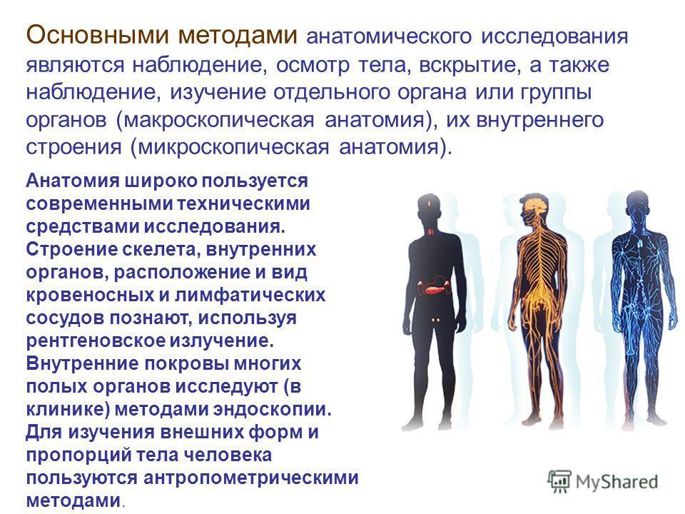 Основными методами анатомического исследования являются наблюдение, осмотр тела, вскрытие, а также наблюдение, изучение отдельного органа или группы органов (макроскопическая анатомия), их внутреннего строения (микроскопическая анатомия). Анатомия ши