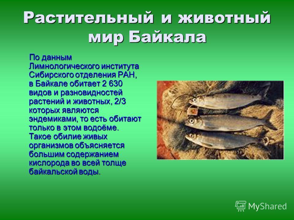 По данным Лимнологического института Сибирского отделения РАН, в Байкале обитает 2 630 видов и разновидностей растений и животных, 2/3 которых являются эндемиками, то есть обитают только в этом водоёме. Такое обилие живых организмов объясняется больш