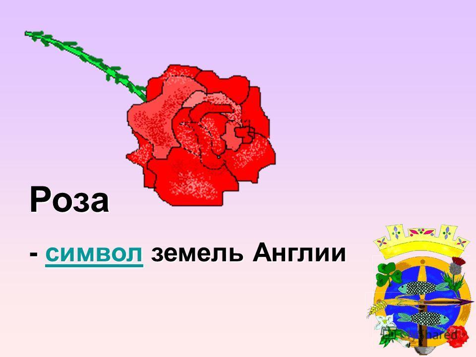 Роза - символ земель Англии символ