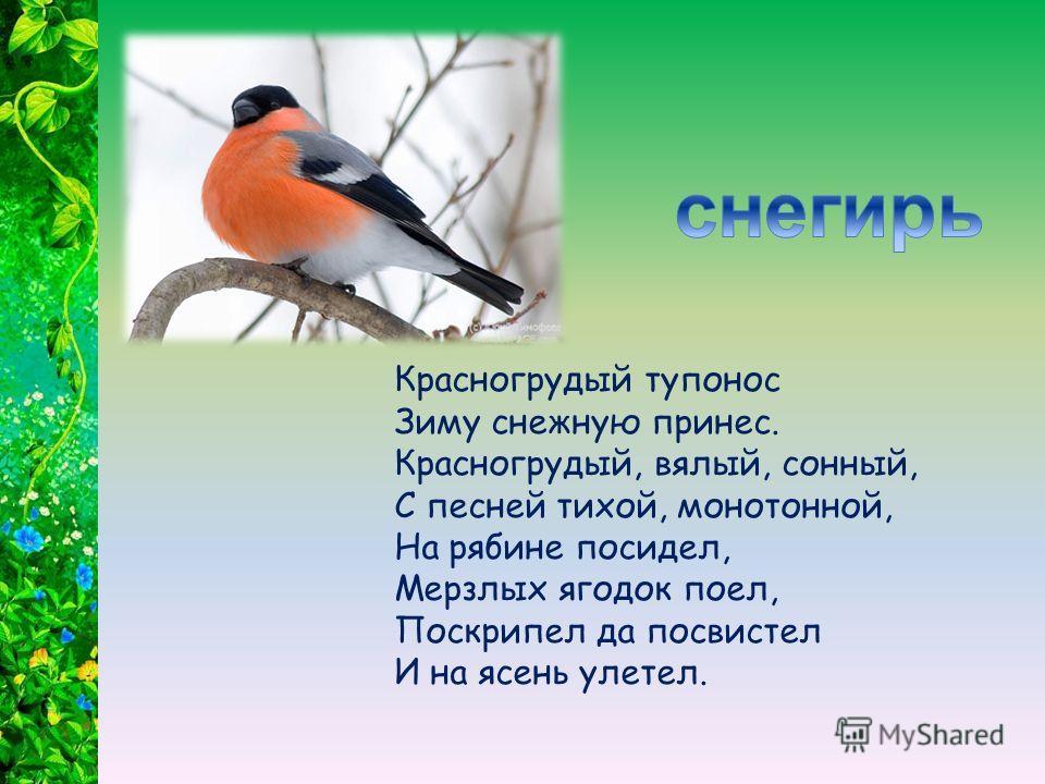 За сорок букв у птицы кличка, Догадайтесь, что за птичка? В гнездах шарит ловко Пестрая воровка.