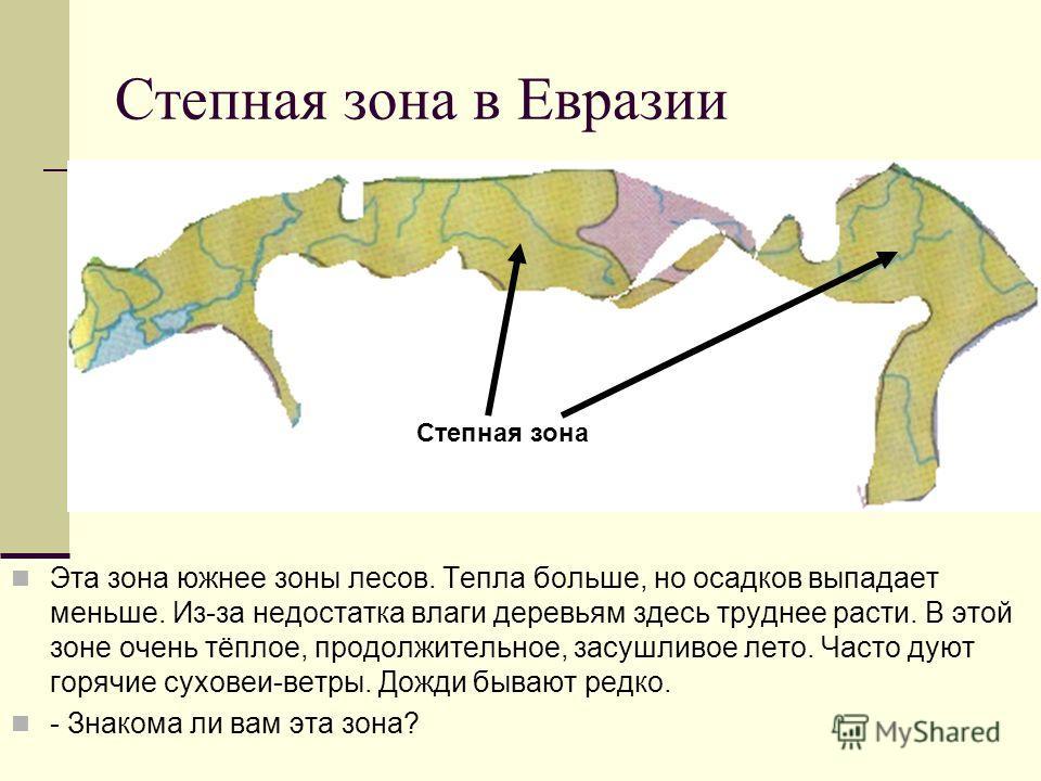 Степная зона в Евразии Эта зона южнее зоны лесов. Тепла больше, но осадков выпадает меньше. Из-за недостатка влаги деревьям здесь труднее расти. В этой зоне очень тёплое, продолжительное, засушливое лето. Часто дуют горячие суховеи-ветры. Дожди бываю