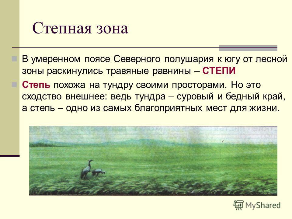 В умеренном поясе Северного полушария к югу от лесной зоны раскинулись травяные равнины – СТЕПИ Степь похожа на тундру своими просторами. Но это сходство внешнее: ведь тундра – суровый и бедный край, а степь – одно из самых благоприятных мест для жиз