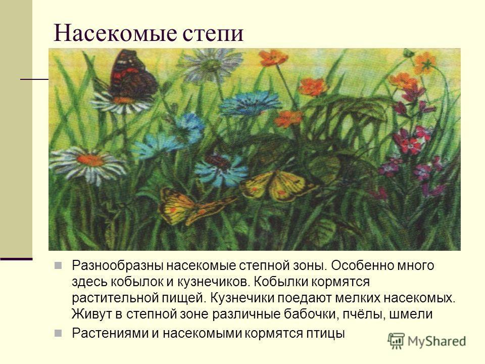 Насекомые степи Разнообразны насекомые степной зоны. Особенно много здесь кобылок и кузнечиков. Кобылки кормятся растительной пищей. Кузнечики поедают мелких насекомых. Живут в степной зоне различные бабочки, пчёлы, шмели Растениями и насекомыми корм