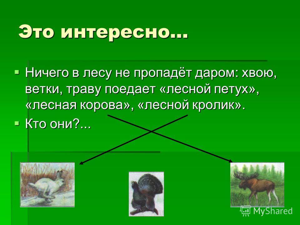 Это интересно… Ничего в лесу не пропадёт даром: хвою, ветки, траву поедает «лесной петух», «лесная корова», «лесной кролик». Ничего в лесу не пропадёт даром: хвою, ветки, траву поедает «лесной петух», «лесная корова», «лесной кролик». Кто они?... Кто