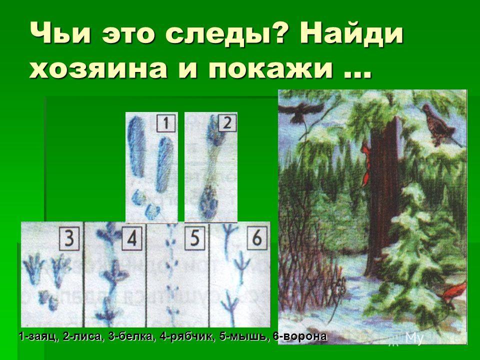 Чьи это следы? Найди хозяина и покажи … 1-заяц, 2-лиса, 3-белка, 4-рябчик, 5-мышь, 6-ворона