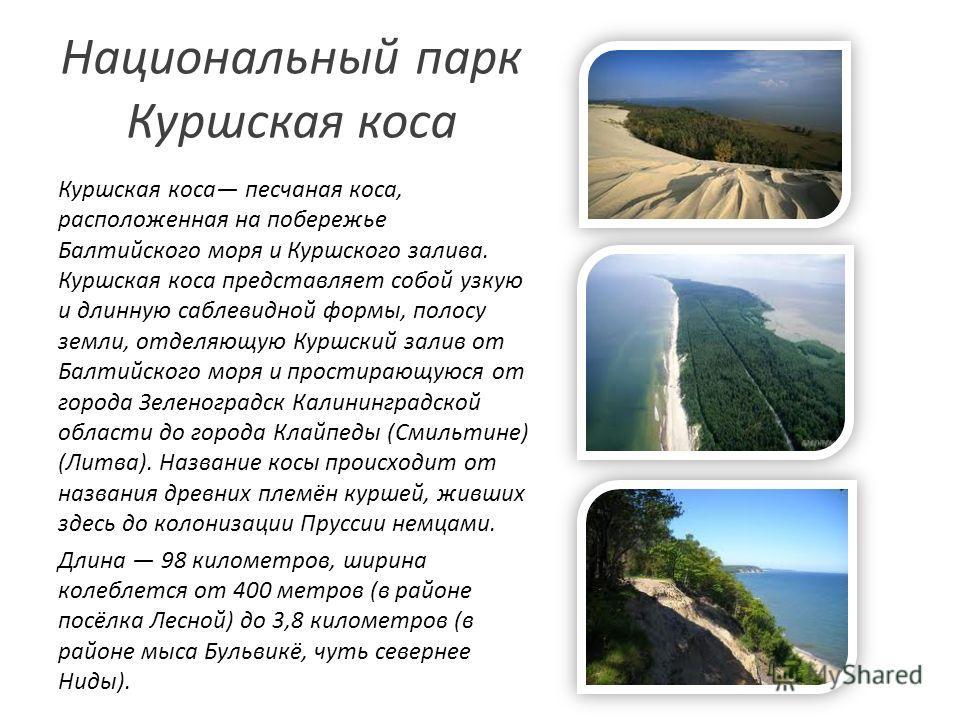 Национальный парк Куршская коса Куршская коса песчаная коса, расположенная на побережье Балтийского моря и Куршского залива. Куршская коса представляет собой узкую и длинную саблевидной формы, полосу земли, отделяющую Куршский залив от Балтийского мо