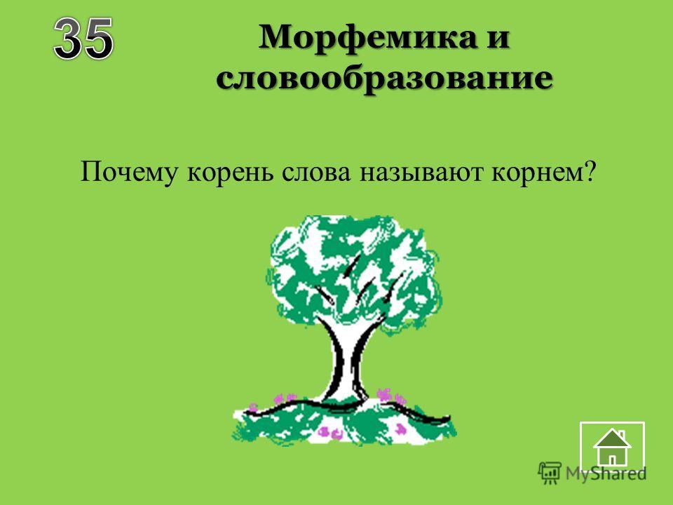 Морфемика и словообразование Почему корень слова называют корнем?