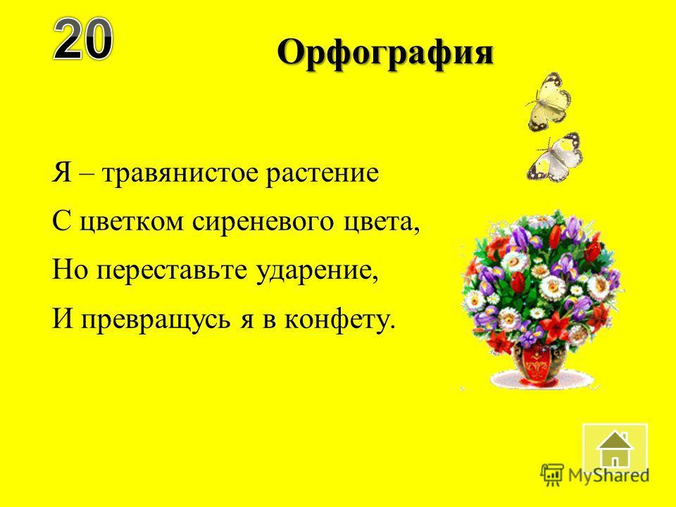 Орфография Я – травянистое растение С цветком сиреневого цвета, Но переставьте ударение, И превращусь я в конфету.