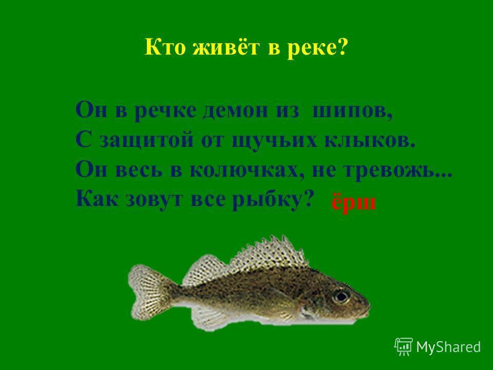 Кто живёт в реке? Он в речке демон из шипов, С защитой от щучьих клыков. Он весь в колючках, не тревожь... Как зовут все рыбку? ёрш