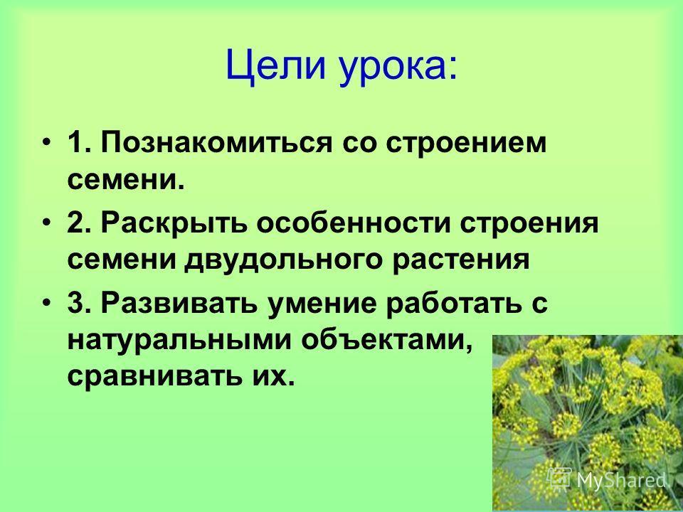 Цели урока: 1. Познакомиться со строением семени. 2. Раскрыть особенности строения семени двудольного растения 3. Развивать умение работать с натуральными объектами, сравнивать их.