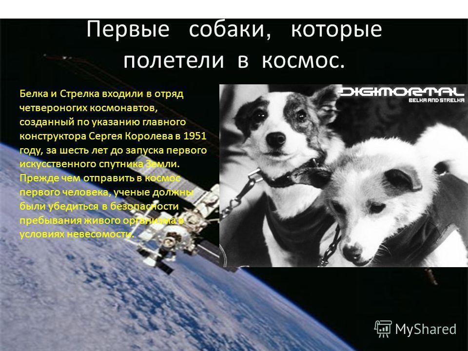Первые собаки, которые полетели в космос. Белка и Стрелка входили в отряд четвероногих космонавтов, созданный по указанию главного конструктора Сергея Королева в 1951 году, за шесть лет до запуска первого искусственного спутника Земли. Прежде чем отп