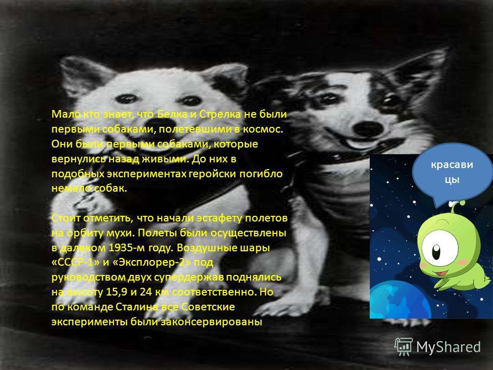 Мало кто знает, что Белка и Стрелка не были первыми собаками, полетевшими в космос. Они были первыми собаками, которые вернулись назад живыми. До них в подобных экспериментах геройски погибло немало собак. Стоит отметить, что начали эстафету полетов