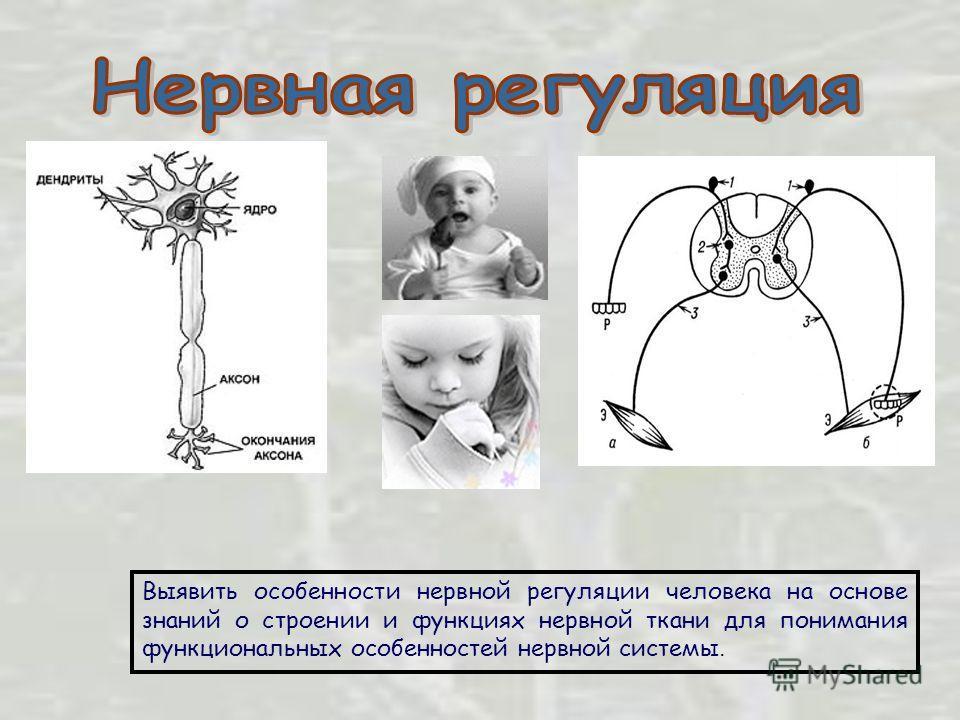 Выявить особенности нервной регуляции человека на основе знаний о строении и функциях нервной ткани для понимания функциональных особенностей нервной системы.