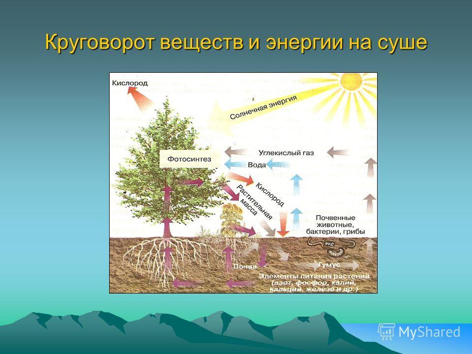 Круговорот веществ и энергии на суше
