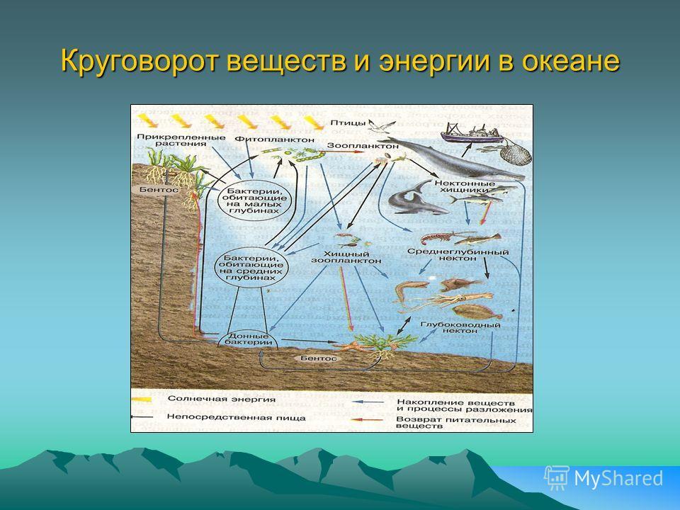 Круговорот веществ и энергии в океане Обмен веществ и энергии в океане Обмен веществ и энергии в океане