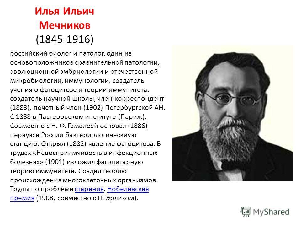 Илья Ильич Мечников (1845-1916) российский биолог и патолог, один из основоположников сравнительной патологии, эволюционной эмбриологии и отечественной микробиологии, иммунологии, создатель учения о фагоцитозе и теории иммунитета, создатель научной ш