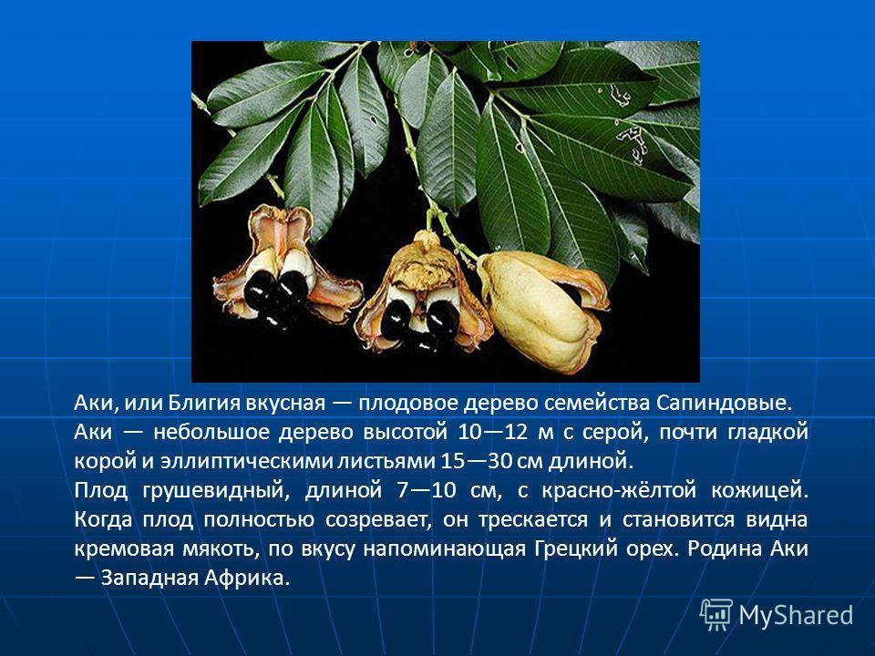 Аки, или Блигия вкусная плодовое дерево семейства Сапиндовые. Аки небольшое дерево высотой 1012 м с серой, почти гладкой корой и эллиптическими листьями 1530 см длиной. Плод грушевидный, длиной 710 см, с красно-жёлтой кожицей. Когда плод полностью со