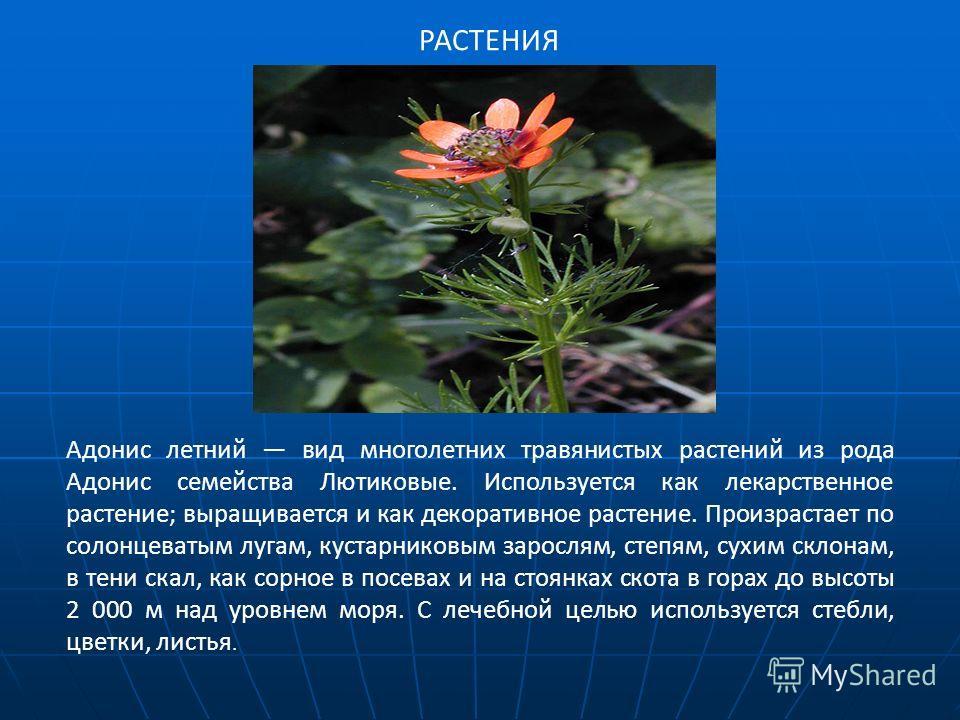 РАСТЕНИЯ Адонис летний вид многолетних травянистых растений из рода Адонис семейства Лютиковые. Используется как лекарственное растение; выращивается и как декоративное растение. Произрастает по солонцеватым лугам, кустарниковым зарослям, степям, сух