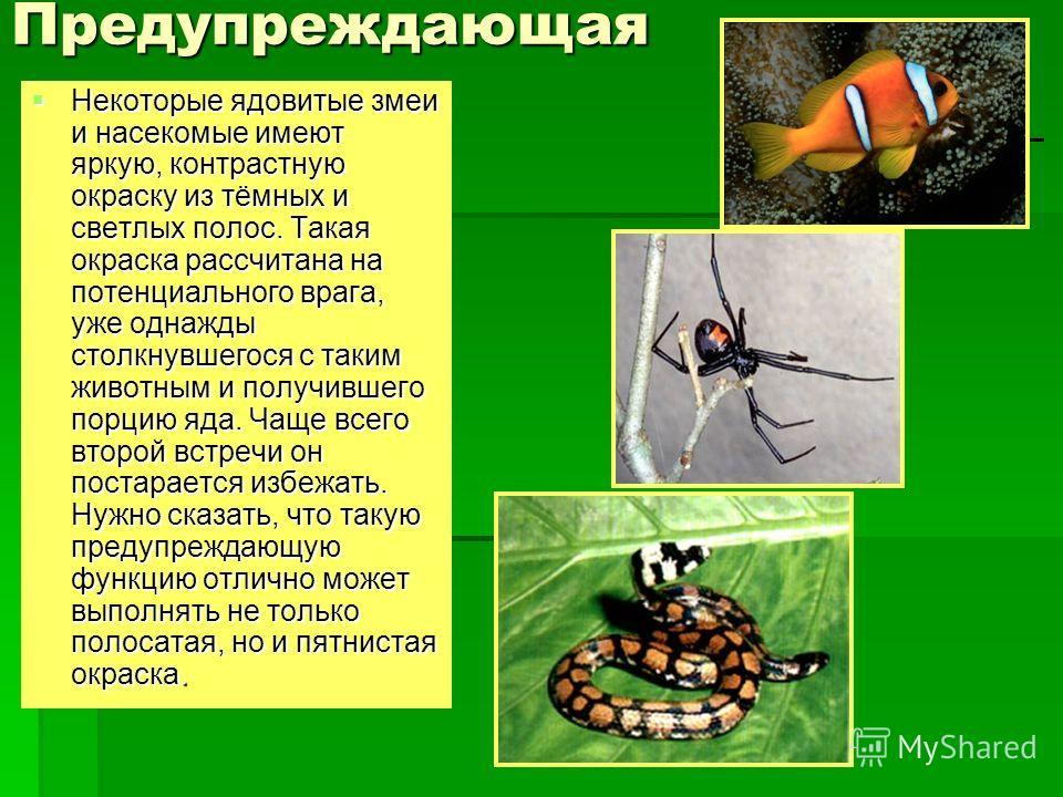 Предупреждающая Некоторые ядовитые змеи и насекомые имеют яркую, контрастную окраску из тёмных и светлых полос. Такая окраска рассчитана на потенциального врага, уже однажды столкнувшегося с таким животным и получившего порцию яда. Чаще всего второй