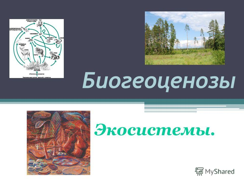 Биогеоценозы Экосистемы.