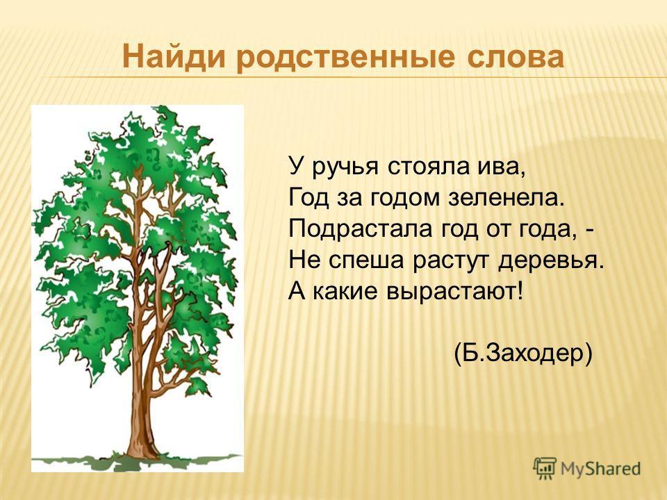 Найди родственные слова У ручья стояла ива, Год за годом зеленела. Подрастала год от года, - Не спеша растут деревья. А какие вырастают! (Б.Заходер)