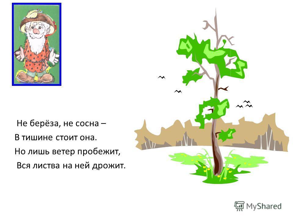 Не берёза, не сосна – В тишине стоит она. Но лишь ветер пробежит, Вся листва на ней дрожит.