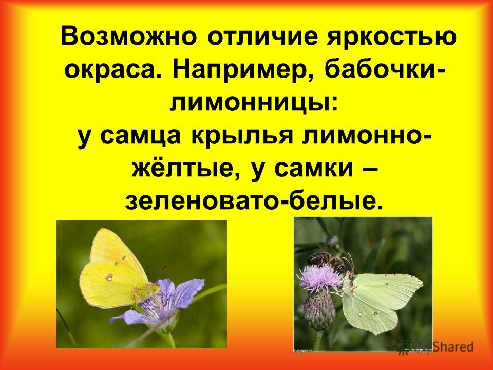 Возможно отличие яркостью окраса. Например, бабочки- лимонницы: у самца крылья лимонно- жёлтые, у самки – зеленовато-белые.
