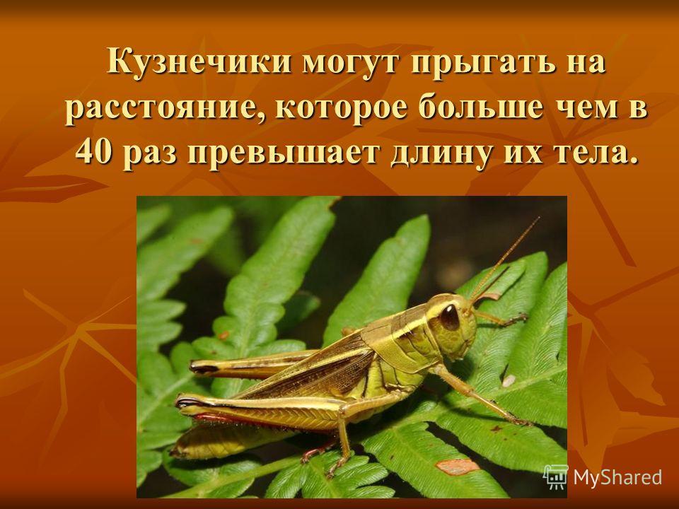 Кузнечики могут прыгать на расстояние, которое больше чем в 40 раз превышает длину их тела.